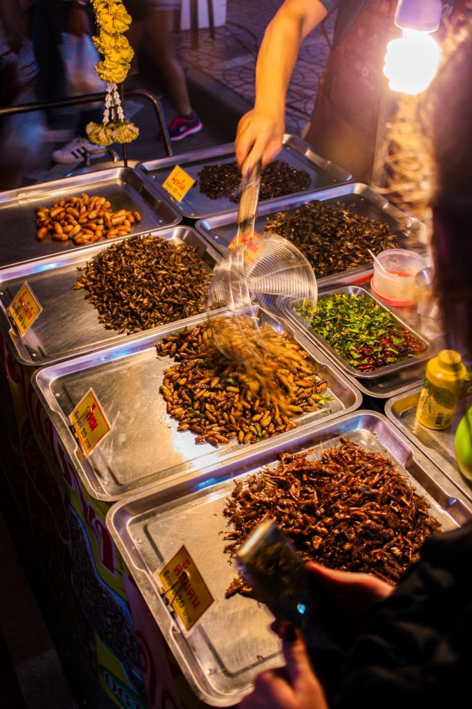 Magots, crickets, and other insects selection at Banzaan fresh market in Phuket, Thailand